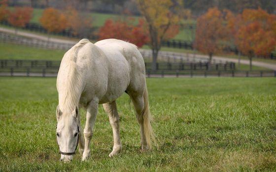 Бесплатные фото белый конь