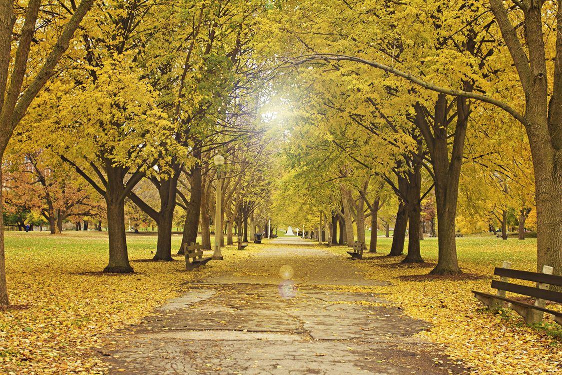 Фото бесплатно Чикагский парк, Lincoln Park, дорога - на рабочий стол