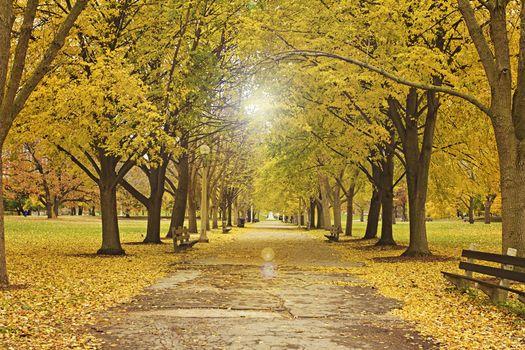 Заставки Чикагский парк, Lincoln Park, дорога