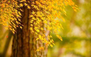 Бесплатные фото дерево,листья,клен,осень