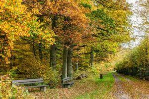 Бесплатные фото осень,лес,парк,дорога,лавочка,деревья,пейзаж