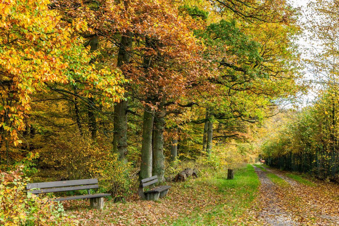 Фото бесплатно дорога, парк, осень - на рабочий стол