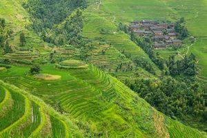 Бесплатные фото рисовые поля,Китай,холмы,дома,деревья,пейзаж