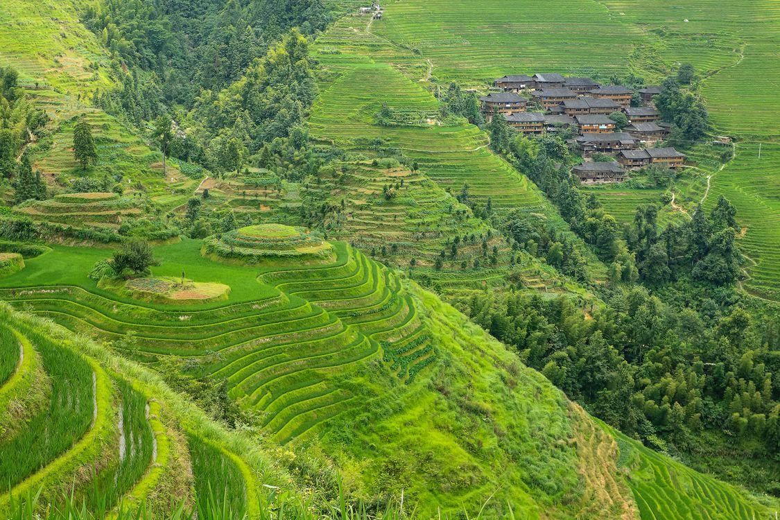 Фото бесплатно рисовые поля, Китай, холмы, дома, деревья, пейзаж, пейзажи