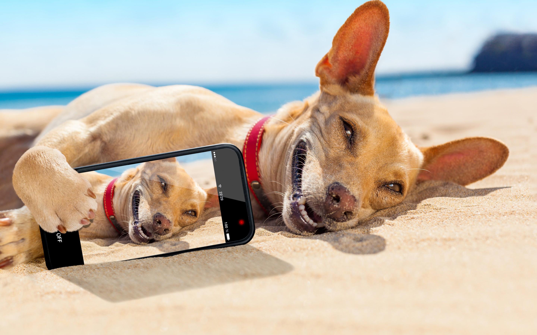 Обои собака, селфи, пляж, улыбка