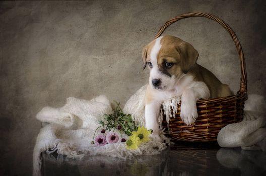 Бесплатные фото стол,корзина,щенок,натюрморт