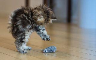 Бесплатные фото котенок,пушистый,морда,лапы,играет,мышка