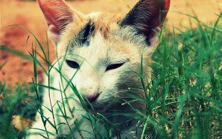 Бесплатные фото кот,морда,глаза,уши,трава,зеленая
