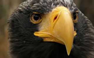 Photo free eagle, head, beak