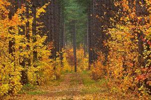 Бесплатные фото осень, лес, дорога, деревья, пейзаж