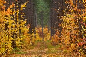 Фото бесплатно осень, лес, дорога, деревья, пейзаж