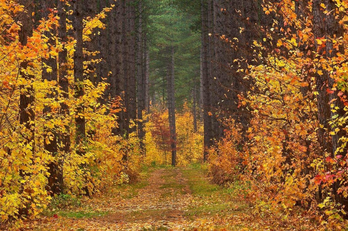 Фото бесплатно осень, лес, дорога - на рабочий стол