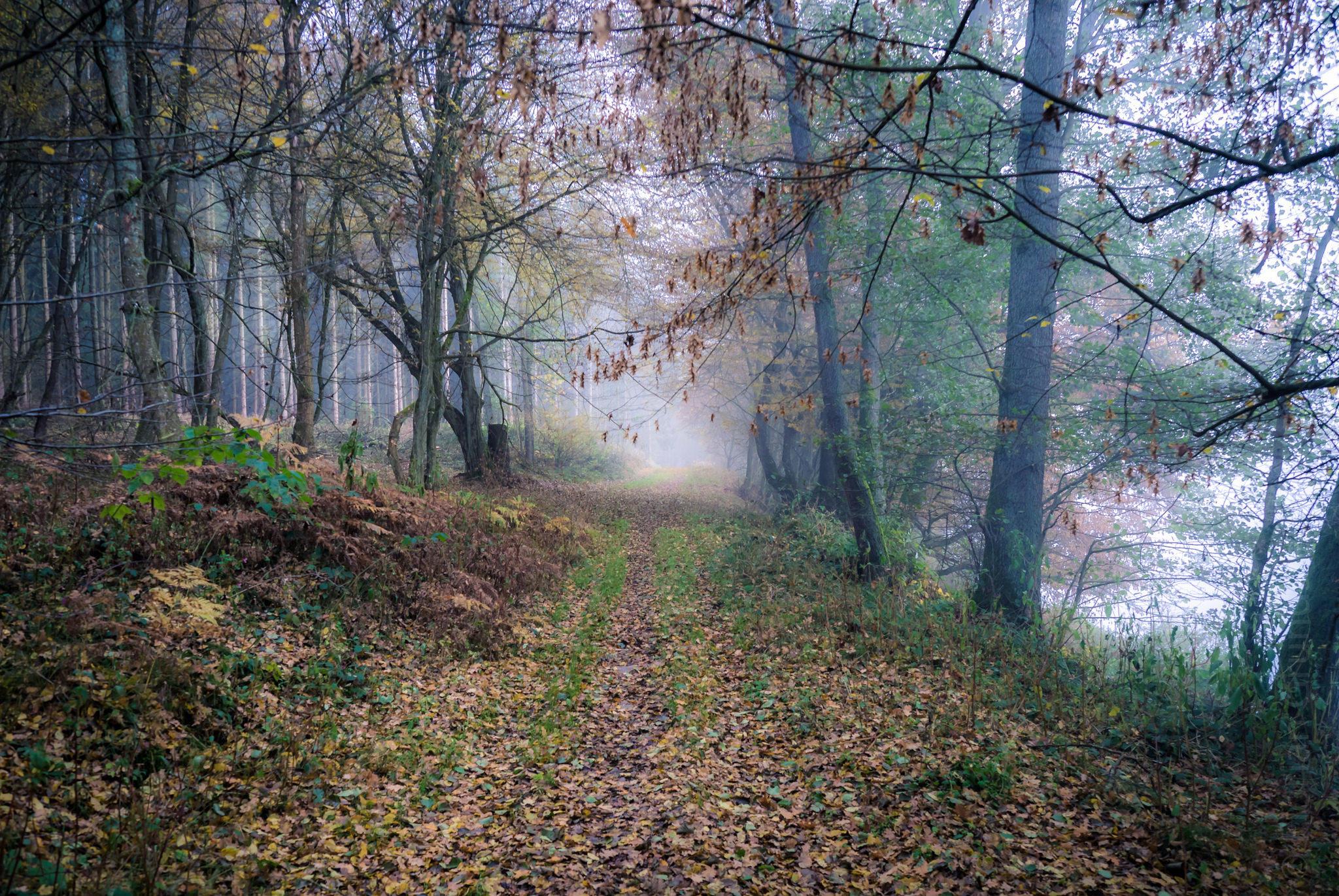 обои осень, дорога, деревья, природа картинки фото