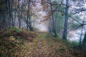 Заставки деревья, туман, fonwall ру