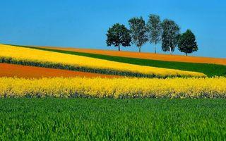 Бесплатные фото поле,деревья,цветы,трава