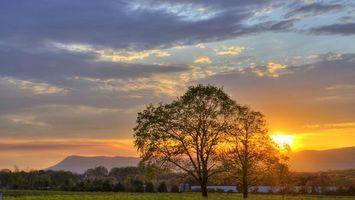 Бесплатные фото закат, дерево, солнце, поле