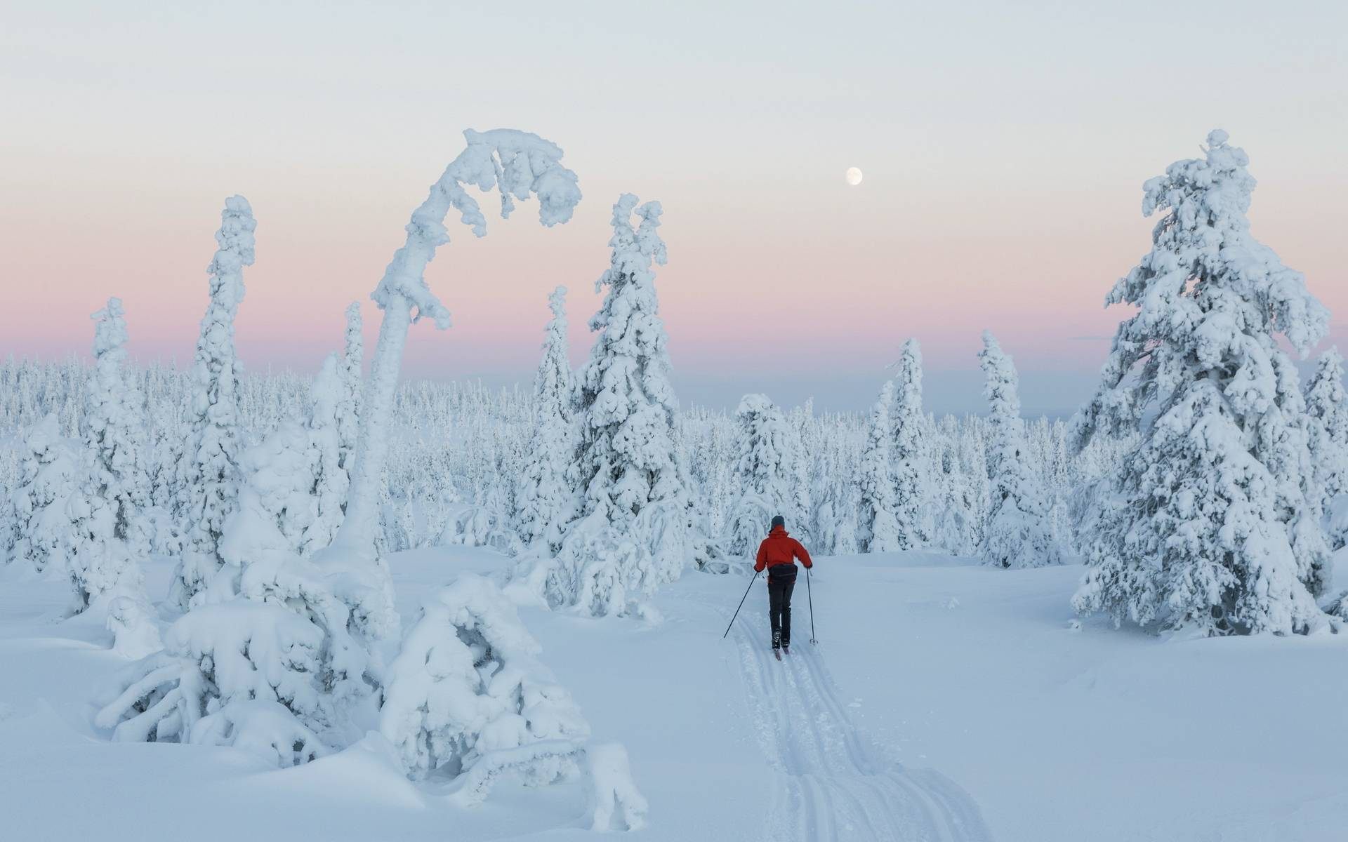 Обои зима, лес, деревья, снег