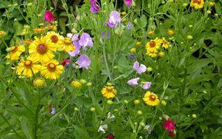 Фото бесплатно цветочки, разные, лепестки, листья, стебли, зеленые