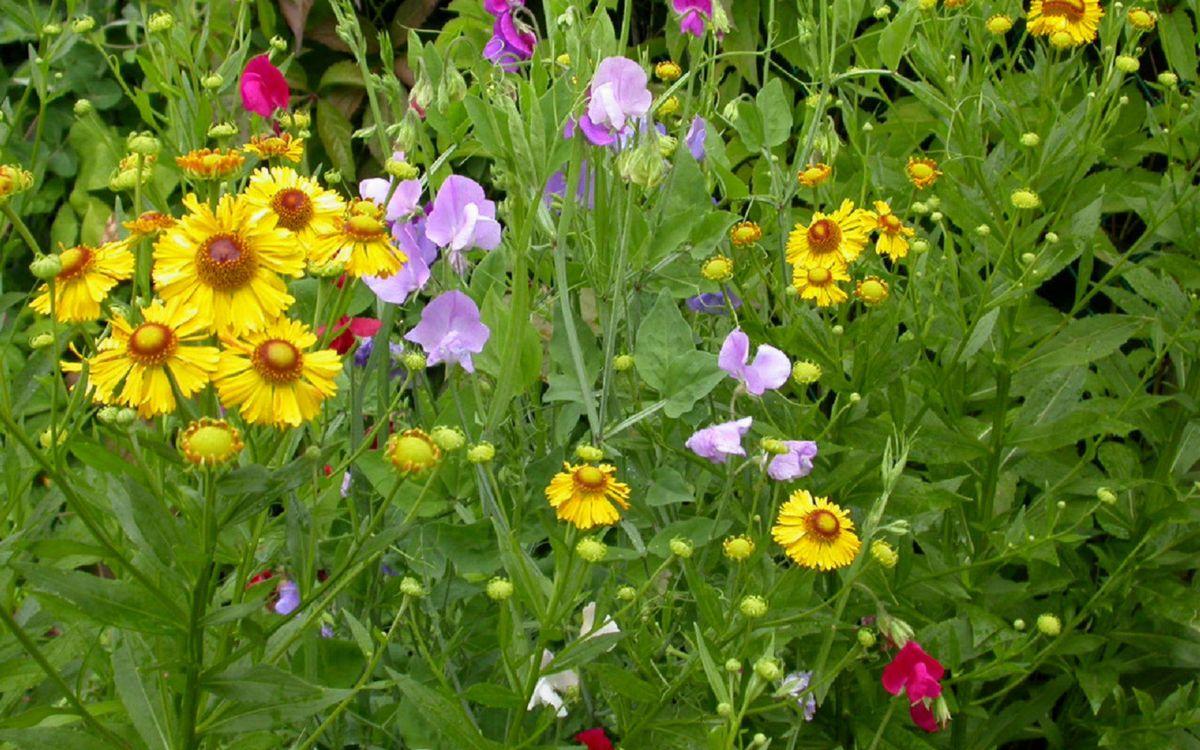Фото бесплатно цветочки, разные, лепестки, листья, стебли, зеленые, цветы