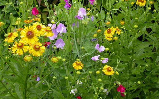 Бесплатные фото цветочки,разные,лепестки,листья,стебли,зеленые