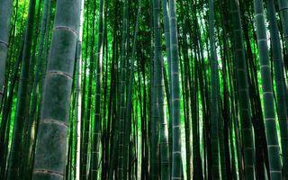 Бесплатные фото бамбуковая роща,трава,стебли,листья