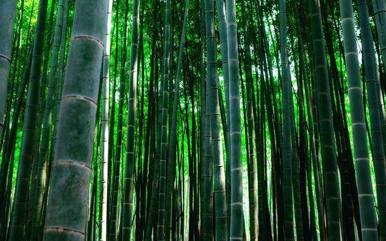 Photo free bamboo grove, grass, stems