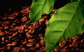 Бесплатные фото кофе,зерна,листья,напиток