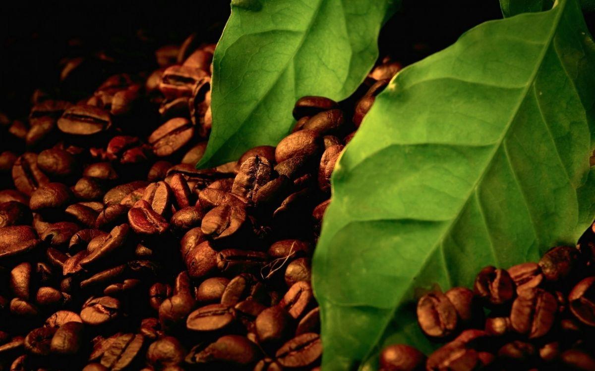 Фото бесплатно кофе, зерна, листья, напиток, еда