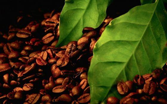 Фото бесплатно кофе, зерна, листья