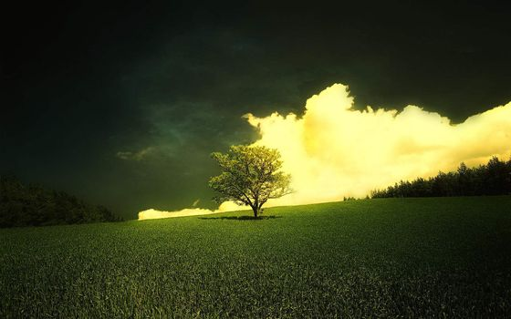Бесплатные фото поле,дерево,крона,кустарник,небо,облака