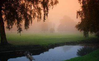 Бесплатные фото утренний туман,ручей,парк,деревья