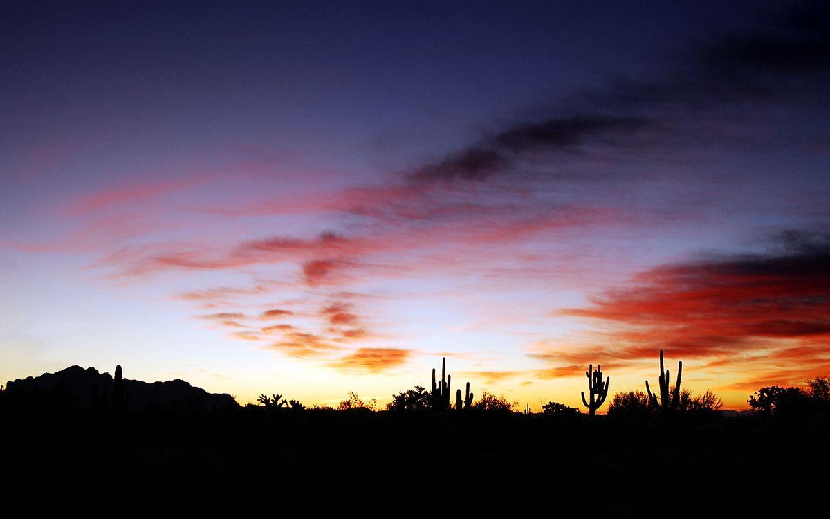Фото бесплатно вечер, растительность, кактусы, небо, облака, закат, пейзажи