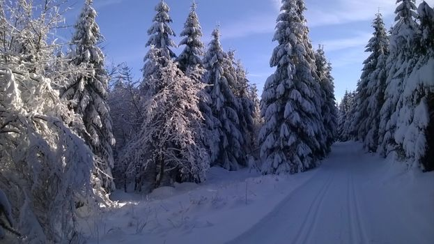 Photo free winter, trees in the snow, winter road