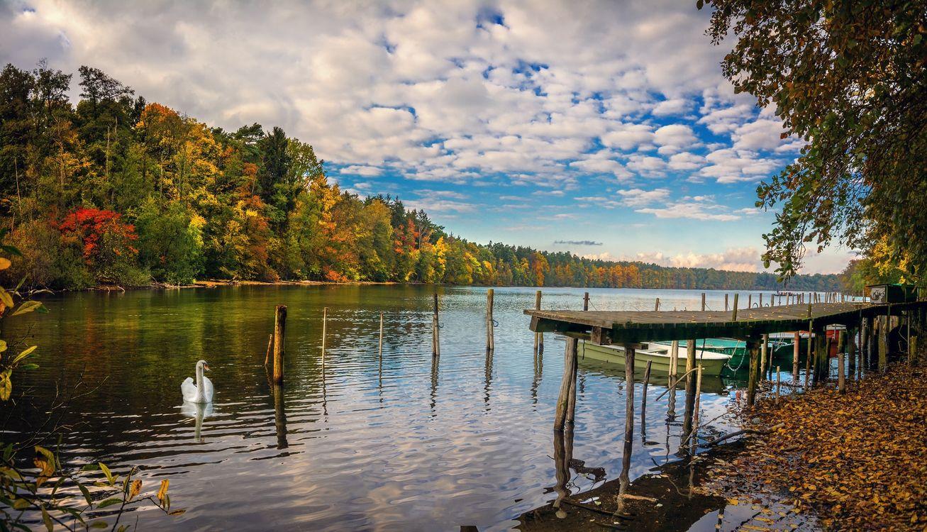 Фото бесплатно река, осень, лодки, деревья, лебеди, пейзаж, пейзажи