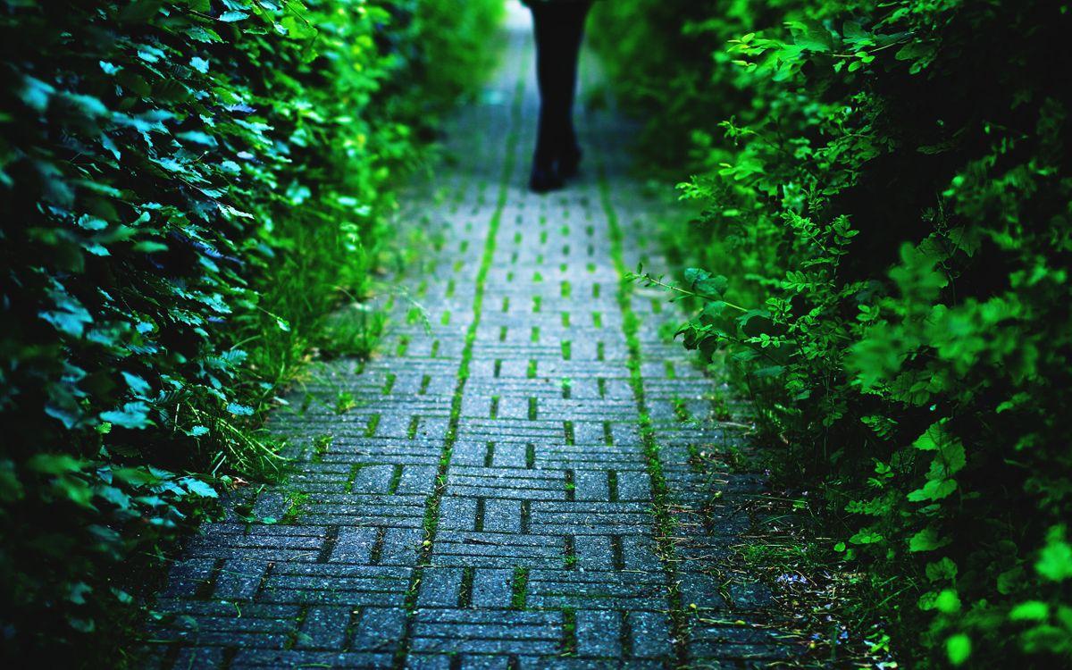 Фото бесплатно тропиннка, брусчатка, человек, кустарник, листья, зеленые, разное