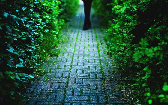 Бесплатные фото тропиннка,брусчатка,человек,кустарник,листья,зеленые