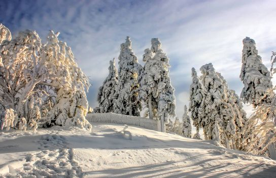 Фото бесплатно снегопад, елки, сугробы