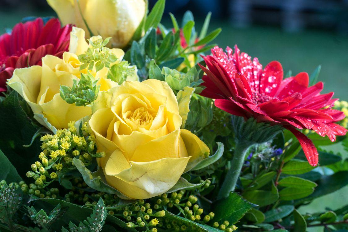 Фото бесплатно цветы, букет, розы - на рабочий стол