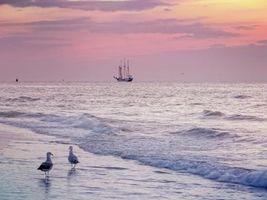 Бесплатные фото море,берег,чайки,волны,парусник,пейзаж