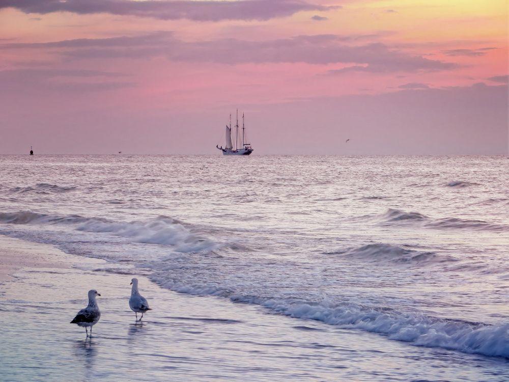 Фото бесплатно море, берег, чайки, волны, парусник, пейзаж, пейзажи - скачать на рабочий стол