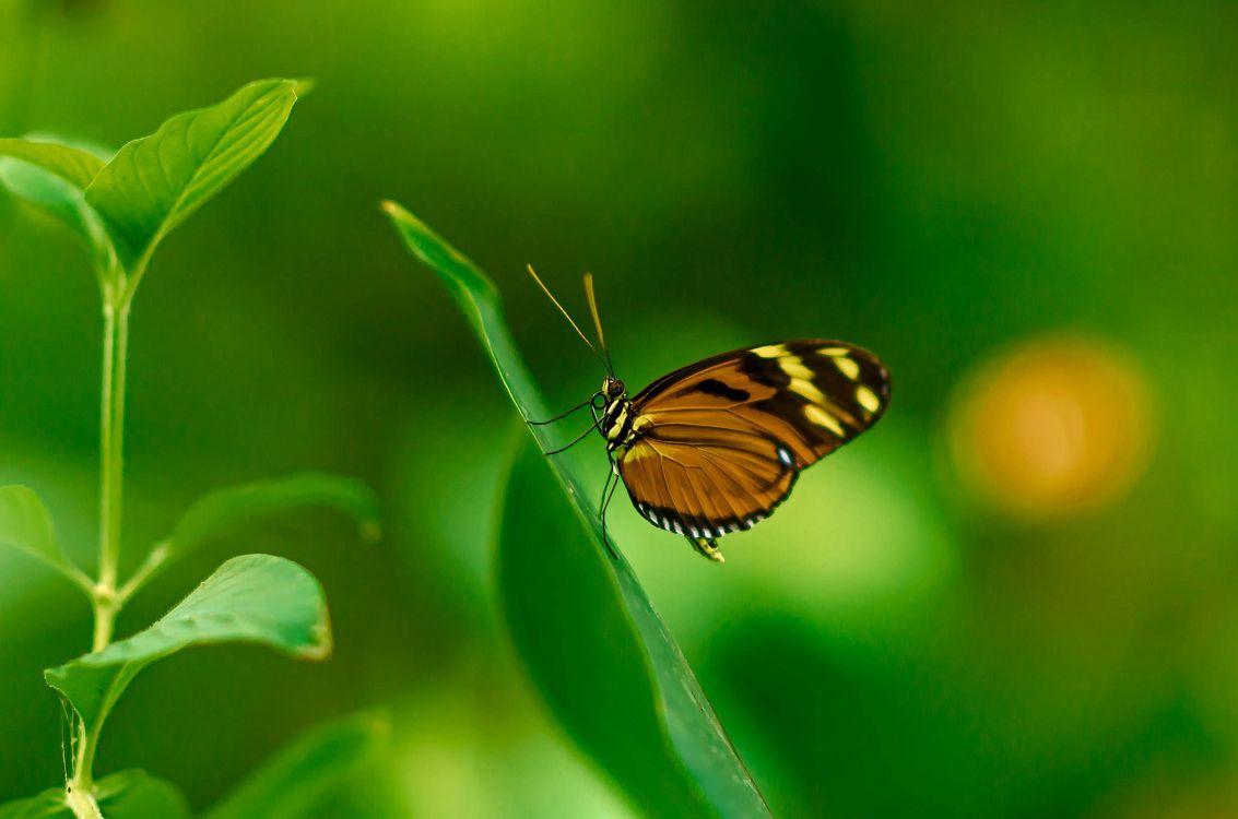 Фото бесплатно растение, бабочка, макро, насекомые - скачать на рабочий стол