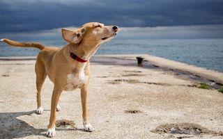 Бесплатные фото собака,нюхает,воздух,берег,море,бетон