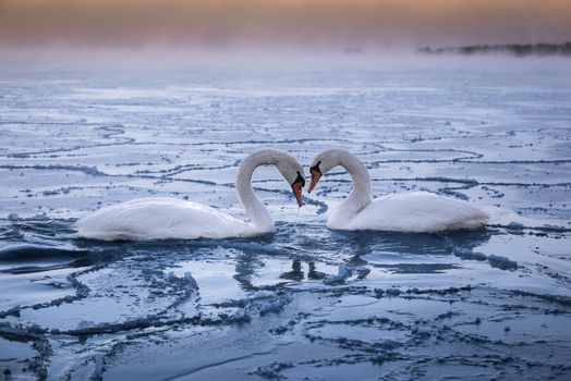 Photo free winter, Espoo, lake