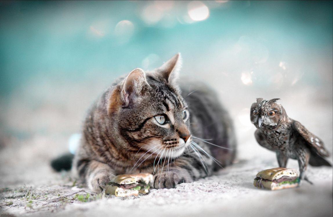 Кот и филин · бесплатное фото