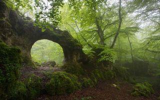 Бесплатные фото скала,арка,растительность,деревья,трава,мох,зелень