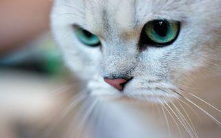 Бесплатные фото кот,мордашка,глаза,зеленые