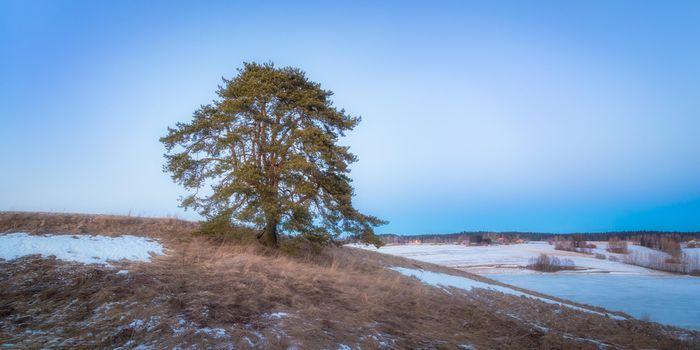 Фото бесплатно зима, дерево, холмы