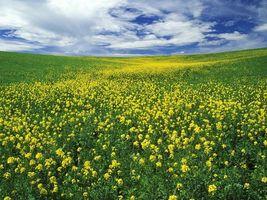Заставки холмы,поле,трава,цветы,небо,облака