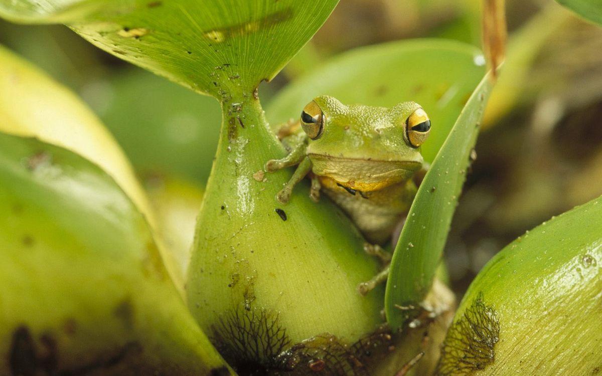 Фото бесплатно растение, лягушка, зеленая - на рабочий стол