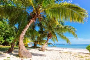 Бесплатные фото остров,море,океан,берег,пляж,пальмы,пейзаж